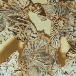 Detail Foliage 1